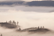 fog settles into the valleys of the coastal mountains at sunrise. Clatsop State Forest, Oregon.