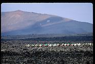 07: CANARY ISLANDS LANZAROTE CAMELS