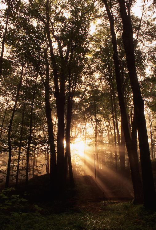 Northeast PA Landscape, <br /> Sunburst, World's End State Park, NE PA