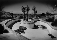 A ghost town of sorts: Dead palms at a failed, closed down water park in the middle of the Mojave Desert, east of Baker, California on the highway to Las Vegas, USA.  The desert is a graveyard of unfulfilled dreams.