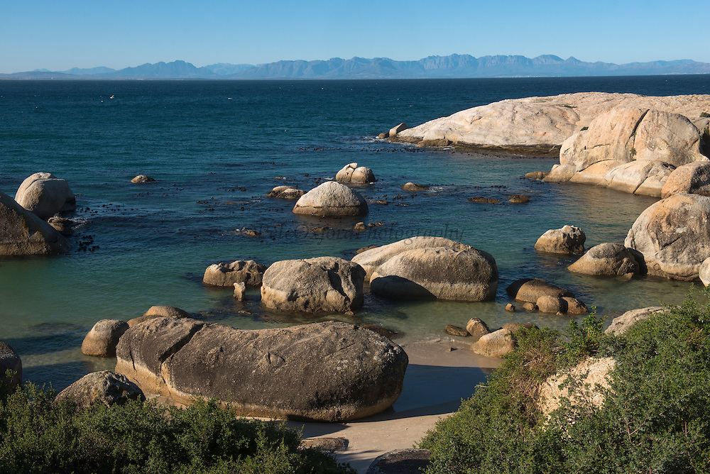 Boulders Beach African penguins (Sphenisus demersus) colony site<br /> Situated near Simon's Town in False Bay between Fish Hoek and Cape Point.<br /> Western Cape<br /> SOUTH AFRICA