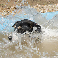 Dog plays in the water of the first hotel dog pool in Budapest, Hungary on July 26, 2020. ATTILA VOLGYI