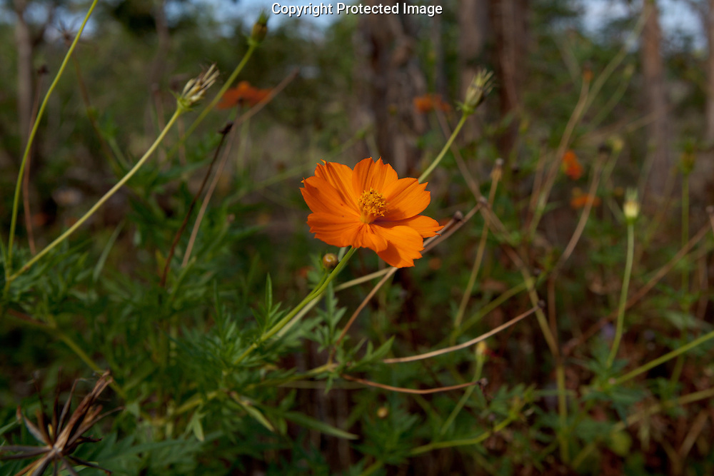 An Orange flower at Totoco Lodge on Ometepe Island in Nicaragua on Monday, February 14th 2011.