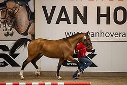 019, Solon van de Lindehoeve<br /> BWP Hengstenkeuring 2021<br /> © Hippo Foto - Dirk Caremans<br />  11/01/2021