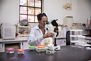 In the laboratory of the botanical garden, where we look for the most resistant lemons