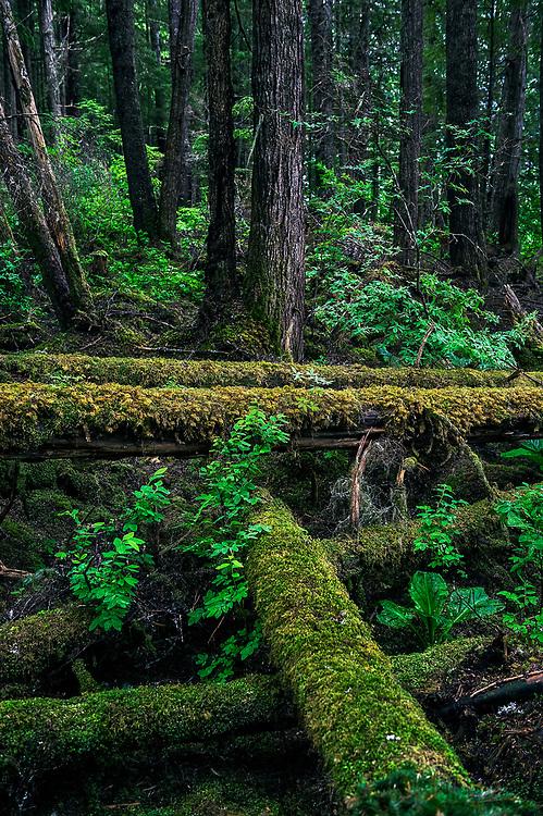 Fallen forest trees and moss, Hoonah, Alaska, USA