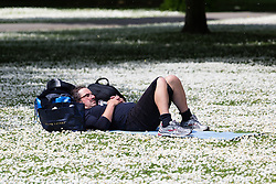 © Licensed to London News Pictures. 14/05/2014. London, UK. A man relaxes amongst the dasies during sunshine and good weather in Regents Park in London on 14th May 2014. Photo credit : Vickie Flores/LNP