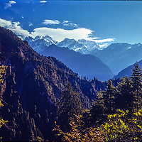 Forests line the Manang River Valley, north of the Annapurna massif, Nepal. Manaslu & Peak 29 rise in the background.
