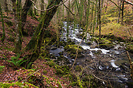 The Torrent Walk along the River Clywedog, Dolgellau, Snowdonia, Wales.