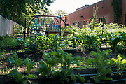 A view of the Pillsbury United Communities vegetable garden at Waite House Neighborhood Center in Minneapolis, Minnesota, U.S., on Friday, July 24, 2020. Photographer: Ben Brewer/Bloomberg