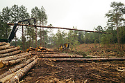 """CHILDERSBURG, AL – AUGUST 3, 2018: A machine stacks timber during a final harvest of Loblolly Pine on a tract located 50 miles outside of Birmingham. <br /> <br /> Nelms, a private forestry consultant, is hired by landowners, appraisers and banking institutions alike to evaluate and oversee timber harvests, which supply the raw material needed by various mills in the region to create everything from paper products and furniture to telephone poles and plywood. """"We can grow timber pretty fast down here to supply the demand for wood fiber,"""" Nelms said. """"The big problem with Southern Yellow Pine though is there's not enough competition for it. There's too much supply for the demand."""" Nelms, who has been working in the industry for over thirty years, says landowners used to get $500 for an acre of """"thinning"""" –the partial removal of timber intended to improve the growth and value of the residual stand. """"Now, it's around $150 per acre,"""" Nelms said. """"The trouble is it's 15 years before you know if it's a good idea or not. So as soon as that tree hits the ground it gets complicated in a hurry. Years ago, it was a pretty good investment. Now people just don't want to do it. And some people are hung, because that's all they got."""" CREDIT: Bob Miller for The Wall Street Journal<br /> TIMBER_AL"""