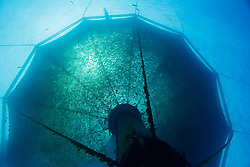 scuba diving worker and 3,000-cubic-meter submersible fish pen installed in open ocean just off Kona Coast to raise Kona Kampachi, Hawaiian yellowtail, aka almaco jack or kahala, Seriola rivoliana, Kona Blue Water Farms, Kailua Kona, Big Island, Hawaii, USA, Pacific Ocean