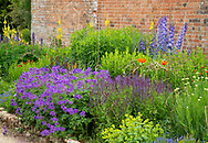 Geranium 'Rosanne' and Salvia 'Caradonna' in the herbaceous border at Waterperry Gardens, Waterperry, Wheatley, Oxfordshire, UK