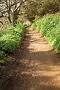 Footpath Island of Herm, Channel Islands, Great Britain