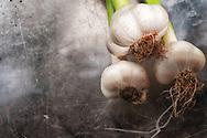 Freshly cleaned garlic from Ben Nevis Farm, Shaw Island, Washington