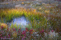 Takh Takh Meadow wet area in autumn