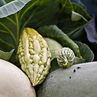 Bitter melon and other Asian vegetables.