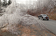 Greenville, NY - A truck drives past trees bend down under with weight of ice after an ice storm on Dec. 14, 2008.