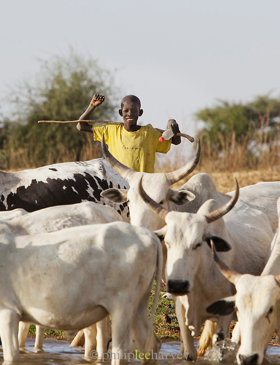 A boy tends to the cattle of his family on the banks of the Niger River at Segou, Mali
