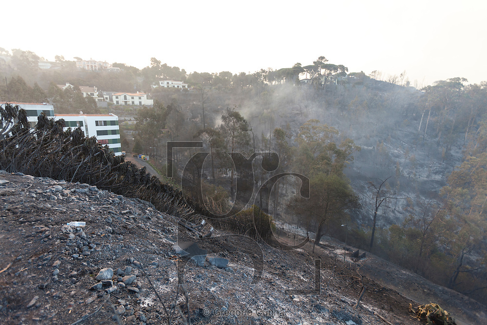 PORTUGAL, Gaula : A charred area is pictured after a wildfire in Funchal, on Madeira Island, on July 21, 2012. The problems started on July 18 evening when high temperatures and strong winds fanned a fire that broke out on the edge of the capital Funchal. PHOTO / GREGORIO CUNHA