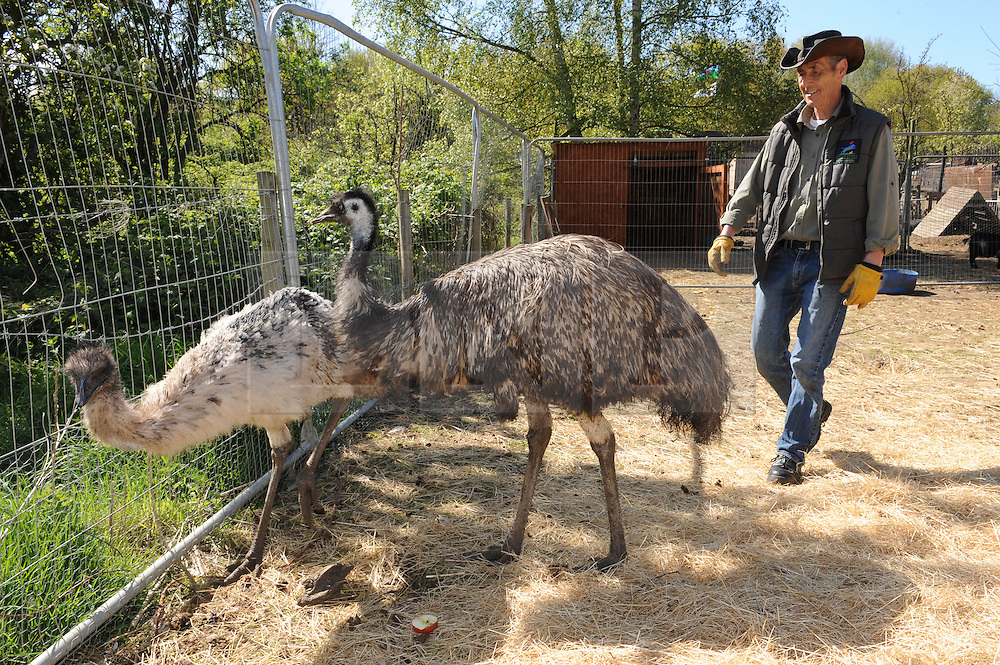 © Licensed to London News Pictures. 28/04/2015<br /> Moo and Zayla the Emu's with Dave Hill from SCAR  <br /> Second Chance Animal Rescue (SCAR) in Crockenhill,Kent have just taken delivery of two Emu's. Moo who is male and 3 years old and the smaller Emu Zayla an 8 month old female. both have been rescued from a private property in Dartford,Kent after SCAR received a call for help from the owner.<br /> Bromley Council have placed a 6 month eviction order on the animal rescue chairty to remove sheds and buildings that house rescued animals.<br /> (Byline:Grant Falvey/LNP)