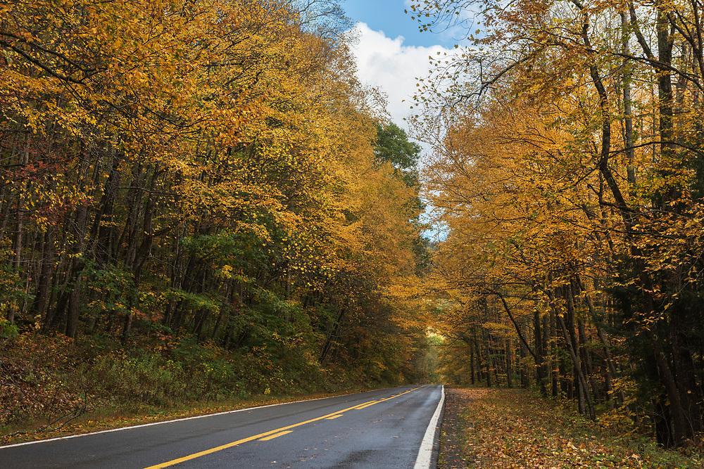 Fall foliage in West Virginia.