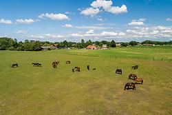 Merrie met veulen<br /> het Trichelhof - Eindhout 2020<br /> © Hippo Foto - Dirk Caremans<br />  13/06/2020