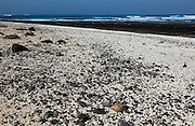 Beach of white crushed coral, near Corralejo on north coast of Fuerteventura, Canary Islands, Spain