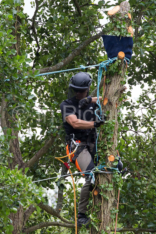 A tree surgeon working with the National Eviction Team pauses during the removal of an ancient alder tree as part of works for the HS2 high-speed rail link to contemplate lines from which environmental activists from HS2 Rebellion are suspended above the river Colne in an attempt to protect the tree on 24th July 2020 in Denham, United Kingdom. A large security operation involving officers from the Metropolitan Police, Thames Valley Police, City of London Police and Hampshire Police as well as the National Eviction Team ensured the removal of the tree by HS2 despite the protests by activists.