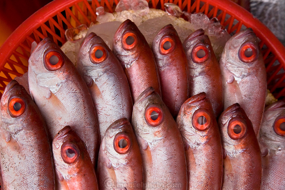 A basket of bigeye snapper is  displayed on a bed of ice for shoppers at the Daxi fish market Taiwan. (From the book What I Eat: Around the World in 80 Diets.)