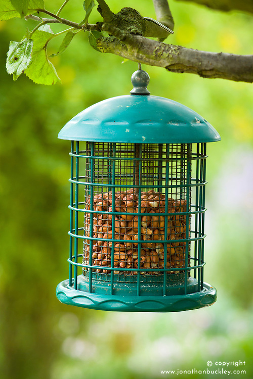 Hanging bird feeder with wire grill filled with nuts