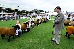 © Licensed to London News Pictures.14/07/15<br /> Harrogate, UK. <br /> <br /> Sheep are judged during one of the competitions on the opening day of the Great Yorkshire Show.  <br /> <br /> England's premier agricultural show opened it's gates today for the start of three days of showcasing the best in British farming and the countryside.<br /> <br /> The event, which attracts over 130,000 visitors each year displays the cream of the country's livestock and offers numerous displays and events giving the chance for visitors to see many different countryside activities.<br /> <br /> Photo credit : Ian Forsyth/LNP