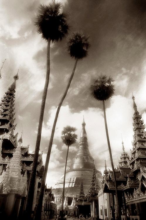 Tall Palms at Shwedagon - Yangon, Myanmar
