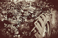 This old, abandoned CO-OP tractor has almost been completely covered in blackberries. Vintage/antiqued edit