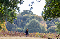 © Licensed to London News Pictures. 05/10/2020. London, UK. A walkers enjoys the mild temperatures and autumnal colours in Richmond Park today after Storm Alex lashed the UK with 3 days of rain. Weather forecasters predict sunshine and showers with a high of 16c for the rest of the week. Photo credit: Alex Lentati/LNP