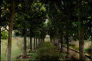 Leafy tree avenue