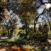 Afternoon in Central Park in the fall