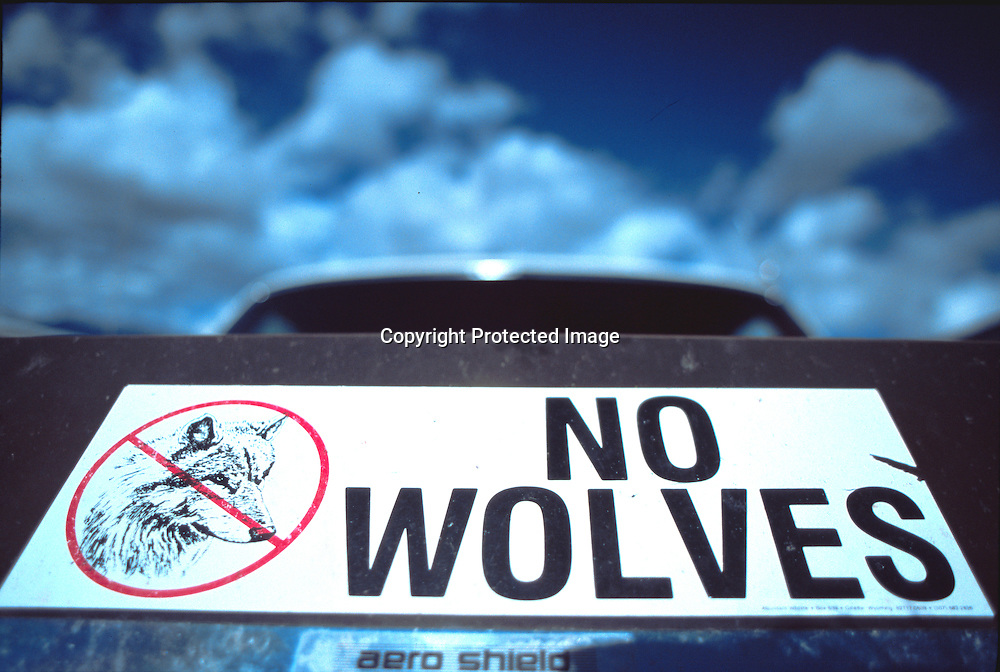 """Ywolf20-""""No Wolves""""bumper sticker on a rancher's pickup truck in Paradise Valley, MT 8/2000"""