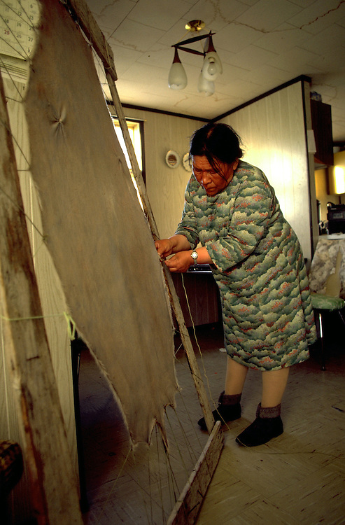 Images from assignment work in Igloolik, Eastern Canadian Artic, in 1985-1986.  Igloolik is an Inuit community with traditional hunting and fishing and a strong sense of self government. Hanna Uyrarak stretches a seal skin that will be sold at the Igloolik Coop.