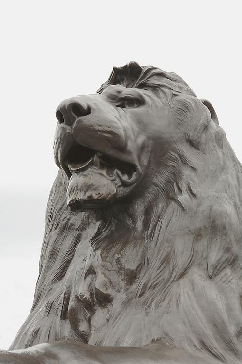 Trafalgar Square Lion - London, UK