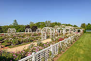 Roses, Three Ponds Farm, Water Mill, Long Island, New York