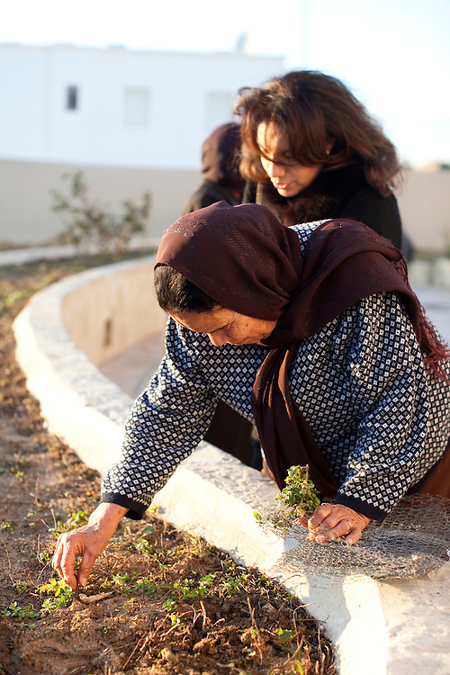 Gammarth, Tunisia. January 29th 2011.Women take mint in the garden of the destroyed house of Belhassen Trabelsi who is Leila Trabelsi's older brother..People walked in the house with family and friends.....