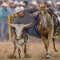 Ethan Randall makes a 6.6-second run to win the night in the steer wrestling competition during the Navajo Nation Fair Rodeo Friday in Window Rock.