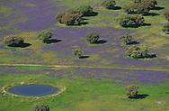 Aerial image.Espiritu Santo area,   dehesa Salamanca Region, Castilla y León, Spain
