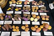 DRY FARMING COLLABORATIVE Showcase:''Purple Abundance' and 'Purple Peruvian' potatoes<br /> Researchers: Amy Garrett & Lucas Nebert, OSU Farmers: Harry Short, Mudjoy Farm & Chris Homanics Chefs:  Jesse McCleery, Pilgrimme; and David Gunawan, Ubuntu Canteen