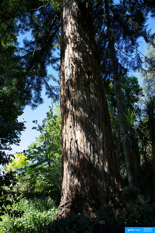 """Eastwoodhill Arboretum, the National Arboretum of New Zealand, encompasses 135 hectares of exotic and native trees, shrubs and climber plantings..Situated near Gisborne on the East Coast of the North Island, Eastwoodhill Arboretum is a picturesque 30 minute drive through vineyards and farmland..The vision of Eastwoodhill is """"to foster understanding and appreciation of nature by education, research and enjoyment of our unique plant collection"""" which drives public participation and appreciation of the Arboretum.  35km out of Gisborne. New Zealand. 17th January 2010 Photo Tim Clayton."""
