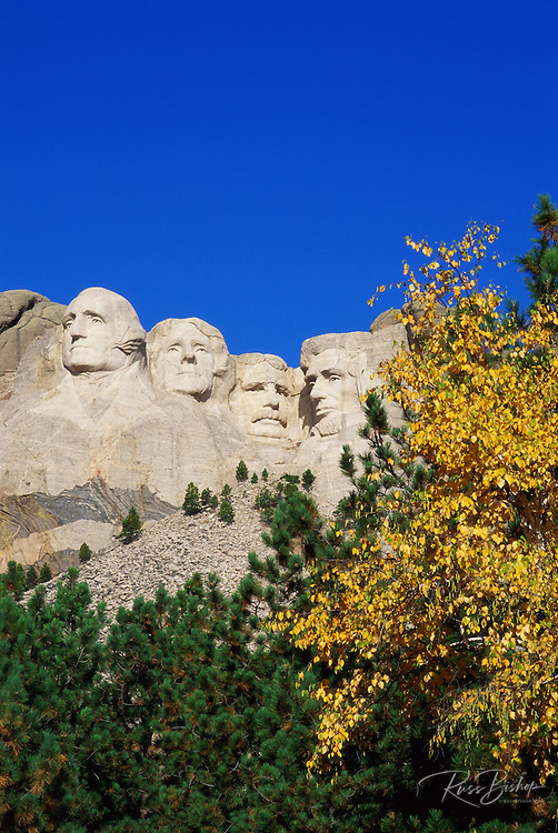 Morning light on Mount Rushmore and fall color under blue sky, Mount Rushmore National Memorial, South Dakota .