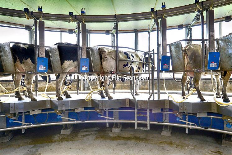 Nederland, The Netherlands, Mook, 10-9-2016Bij een melkveebedrijf worden de koeien op een moderne manier gemolken. Zij stappen in de carrousel die onderdeel is van de stal, en laten zich in een paar minuten melken. De melkbekers laten automatisch los van de uier als deze leeg is. Deze koeien kunnen ook naar buiten in de wei. Door het loslaten van het europese melkquotum verhogen veel boeren hun melkproductie.The Netherlands, Dairy cows are being milked in a fully automatic milking machine. They stand in a carrousel, and by the time milking is done the animal can step out.FOTO: FLIP FRANSSEN