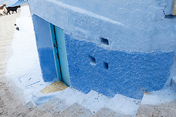 Cat in blue alley, Chefchaouen, Morocco