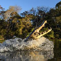 BR 2017, Pantanal North